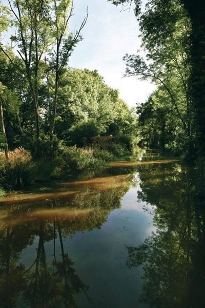 Head out on a walk along the picturesque Wey and Arun canal